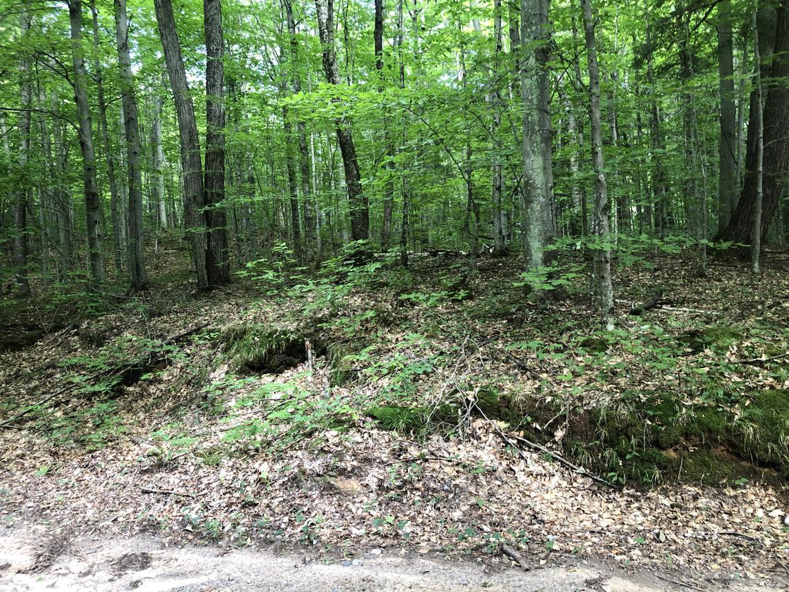 8.91 Acres Wolfe Ln., Silver Cliff, WI 54104